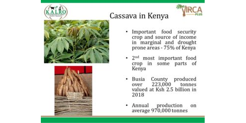 Presentation on The New Cassava Variety, Food Security and Farmer Incomes by Dr Catherine Taracha